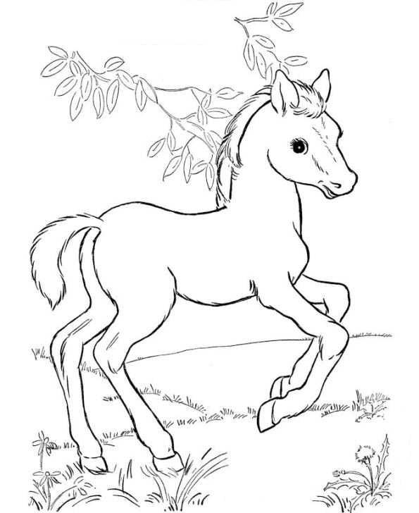 Pferde Ausmalbilder  Kids n fun