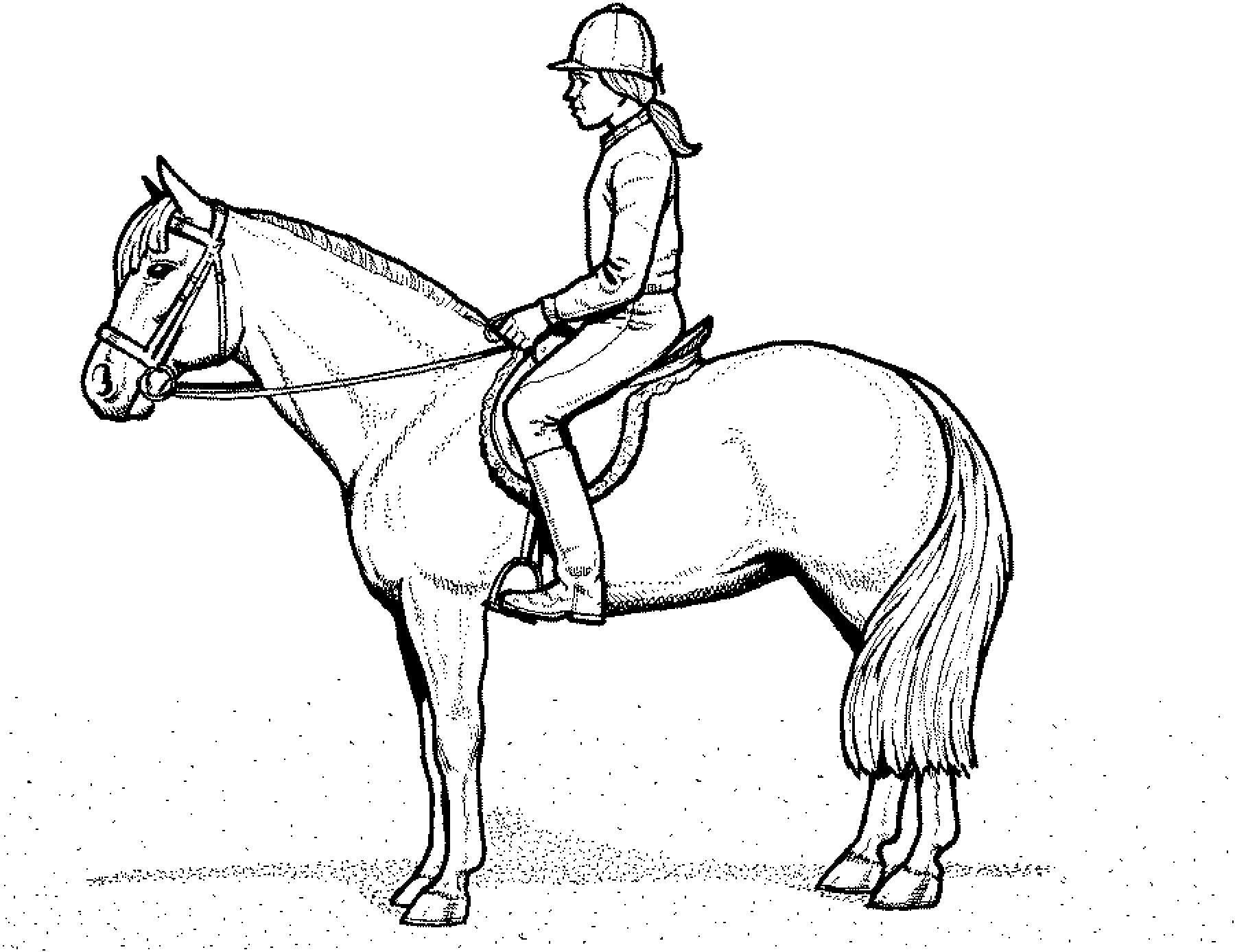 Pferde Ausmalbilder  Ausmalbilder Pferde Mit Reiterin Ausmalbilder Pferde