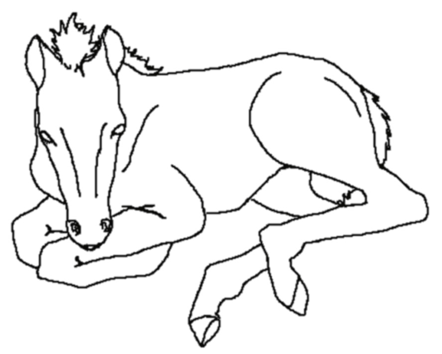 Pferde Ausmalbilder  Ausmalbilder für Kinder Malvorlagen und malbuch • Pferde