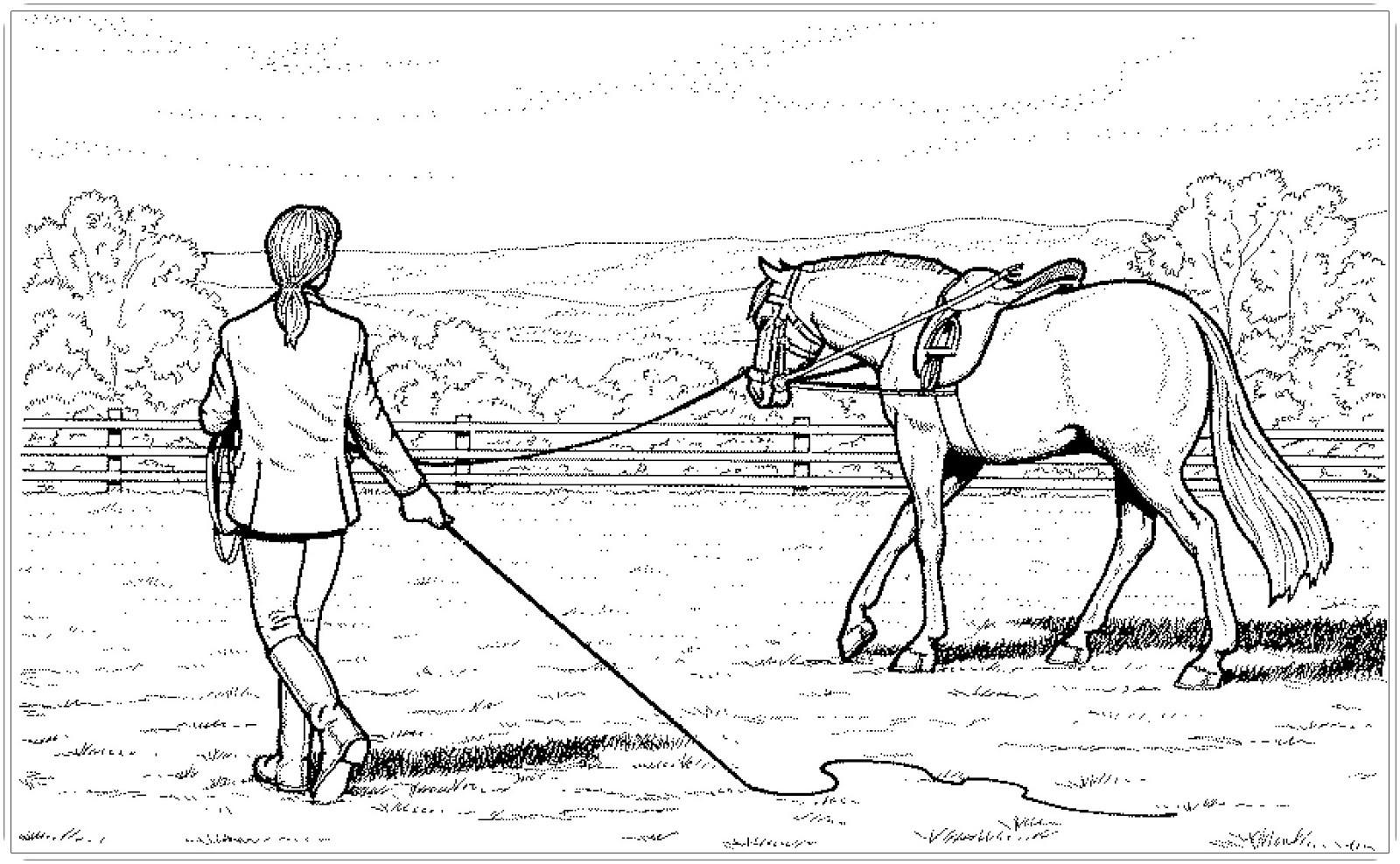 Die Besten Ideen Für Pferde Ausmalbilder Dressur - Beste ...