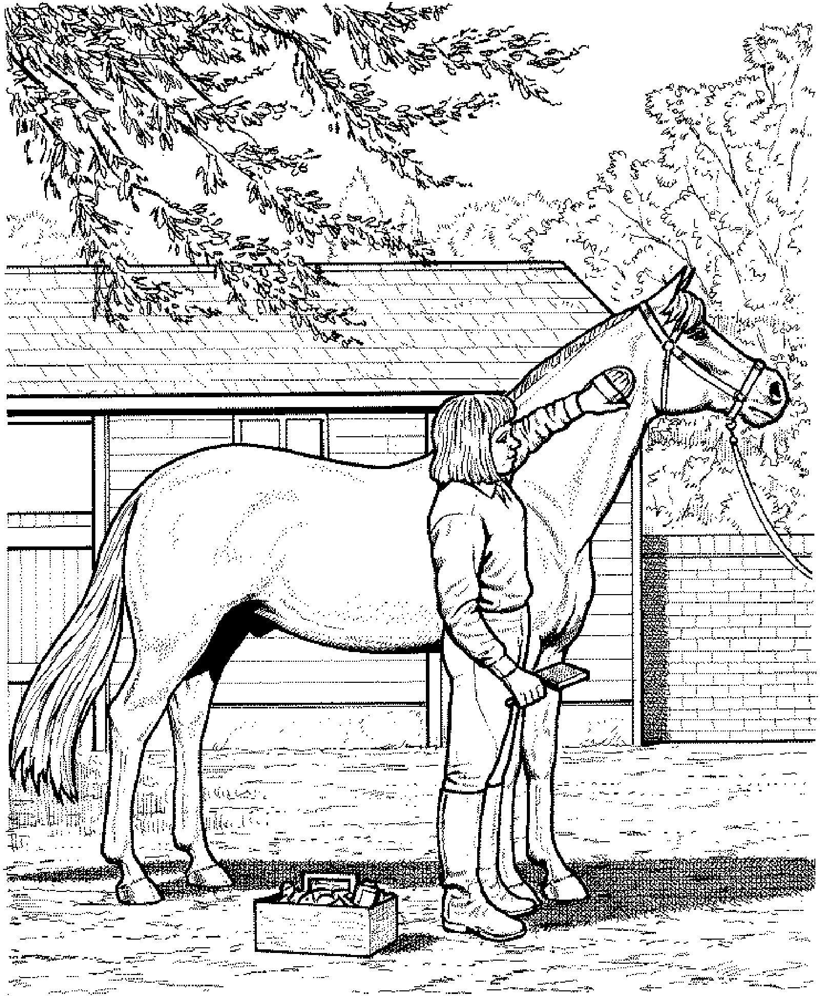 ausmalbilder pferde mit reiterin springend  ausmalbilder