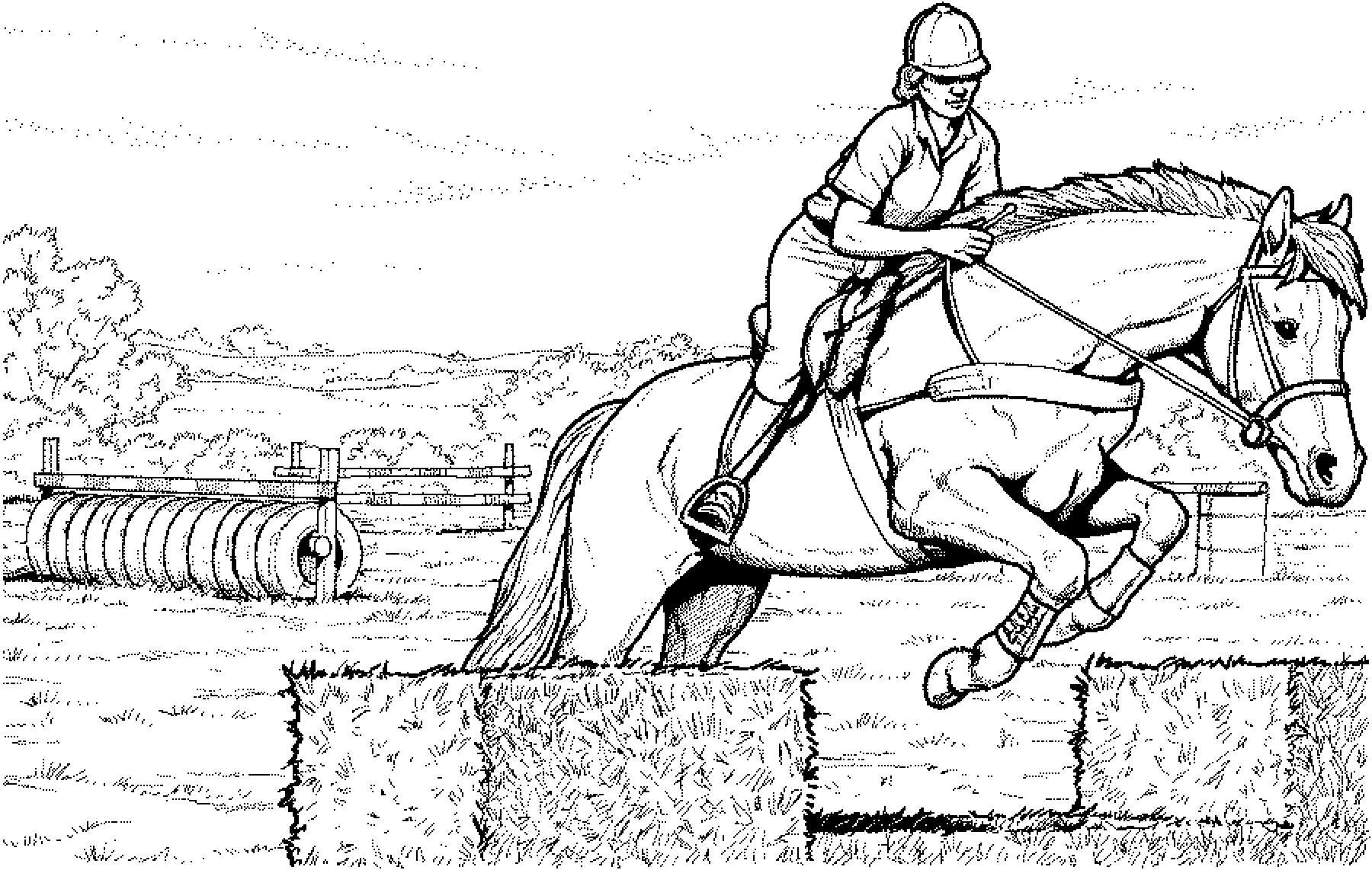 Top 20 Pferde Ausmalbilder Springen - Beste Wohnkultur ...