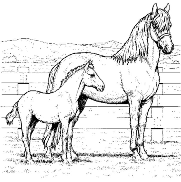 Pferde Ausmalbilder  Ausmalbilder Pferde 2