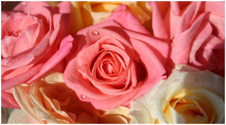 Rosenhochzeit Geschenke  Ideen für Geschenke zum 10 Hochzeitstag Rosenhochzeit