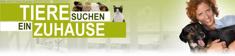 Tiere Suchen Ein Zu Hause  Tiere suchen ein Zuhause bei fernsehserien