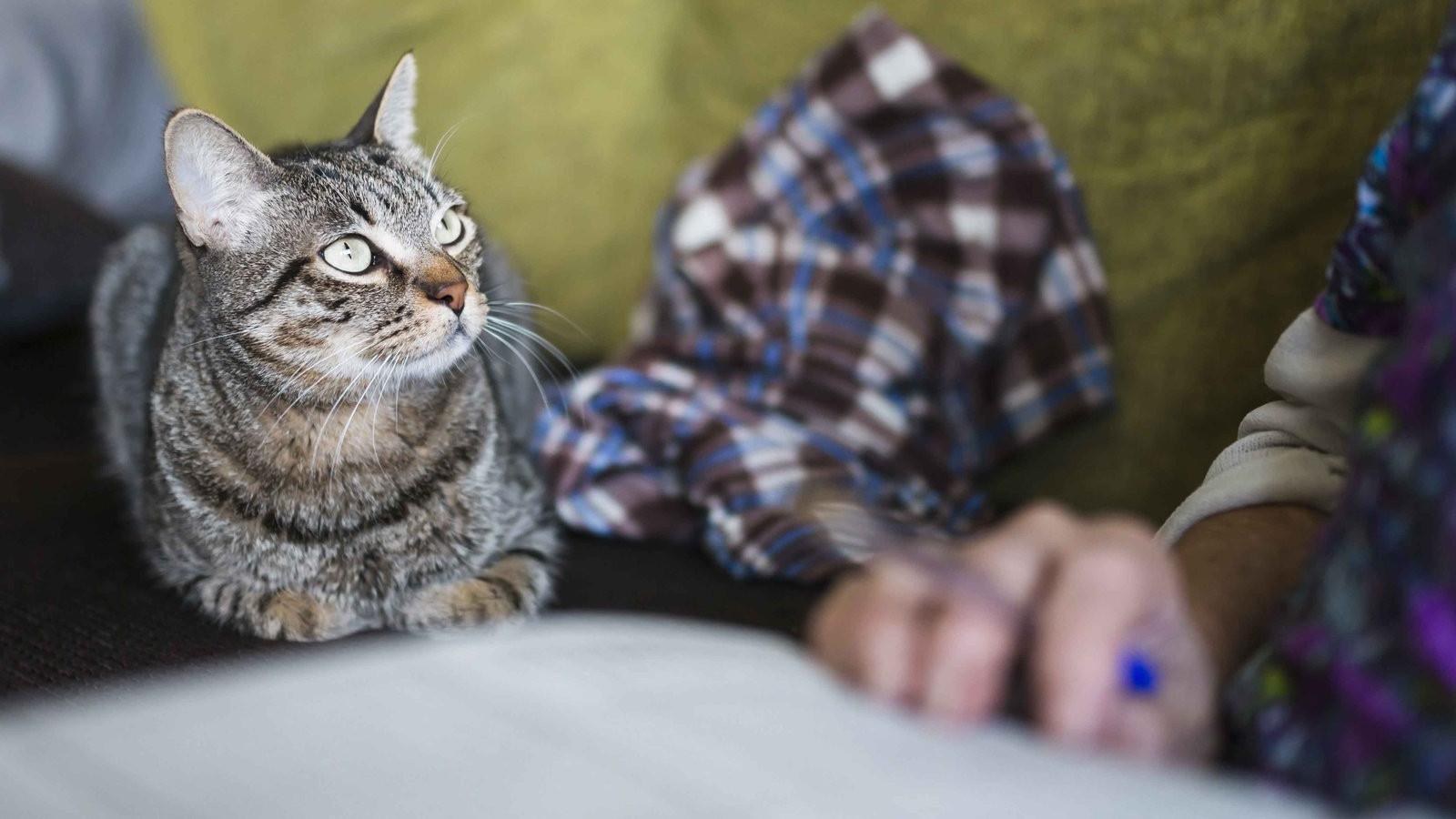 Tiere Suchen Ein Zu Hause  Seniorenkatzen für Senioren Tiere suchen ein Zuhause