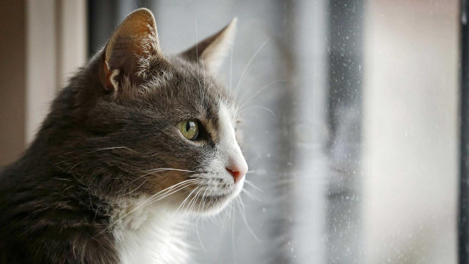 Tiere Suchen Ein Zu Hause  Verhaltensauffällige Katzen Tiere suchen ein Zuhause