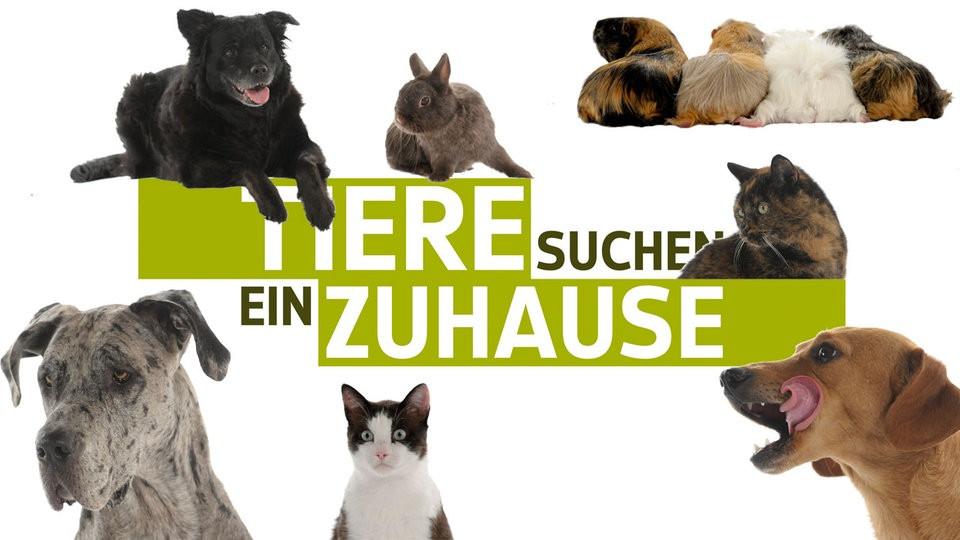 Tiere Suchen Ein Zu Hause  Die Tiere aus allen Sendungen Alle Tiere Tiere suchen