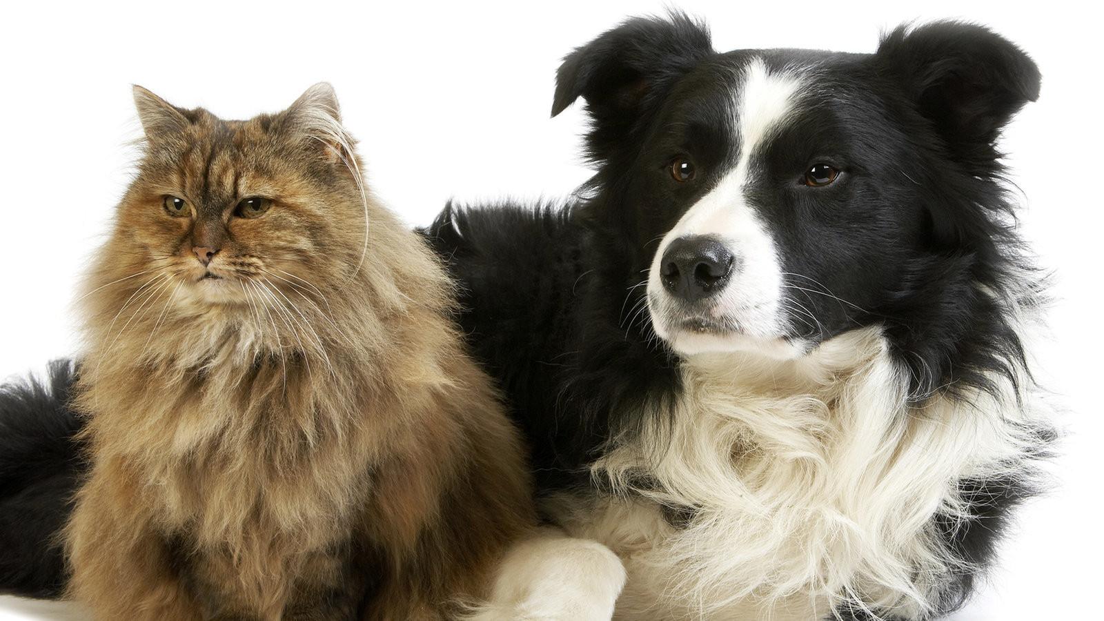Tiere Suchen Ein Zu Hause  Themenschwerpunkte zu Tierhaltung und Tierschutz