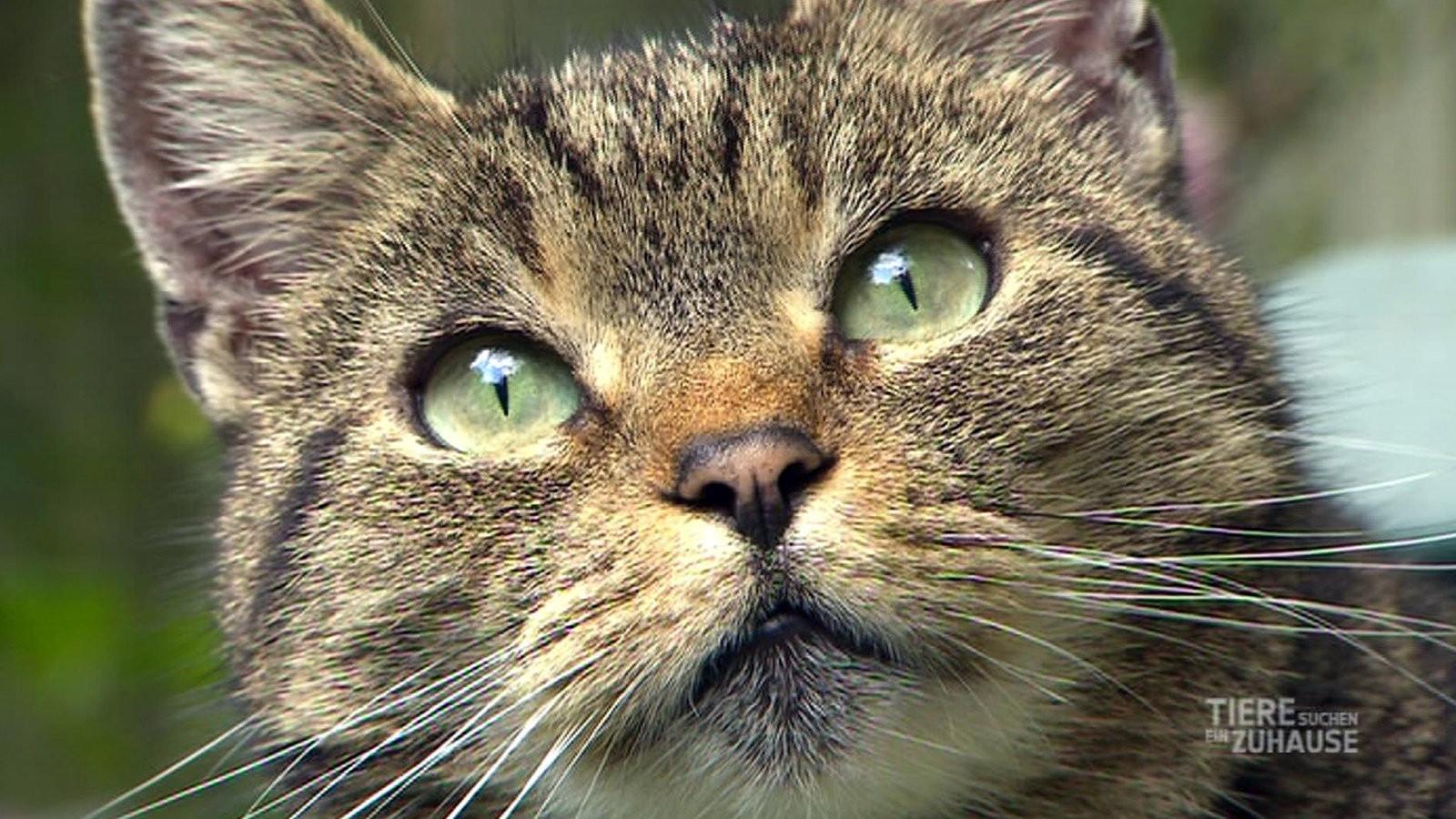 Tiere Suchen Ein Zu Hause  Tiere suchen ein Zuhause Fernsehen WDR