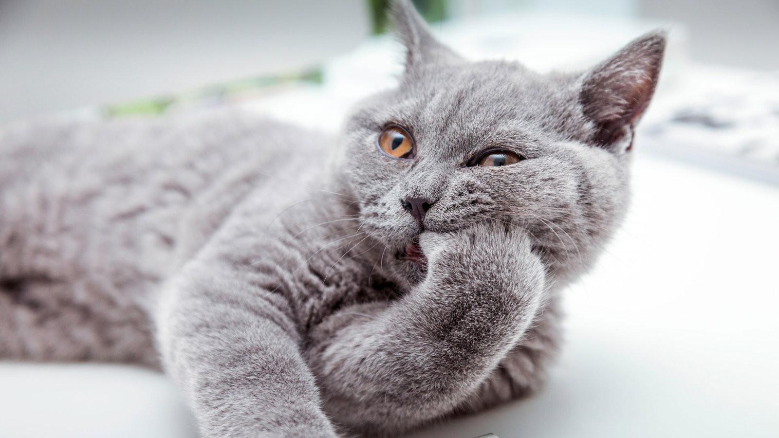 Tiere Suchen Ein Zu Hause  Was sich ändert wenn eine Katze einzieht Tiere suchen