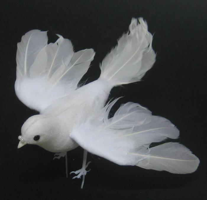 Kosten Hochzeit: 20 Ideen Für Weiße Tauben Für Hochzeit Kosten