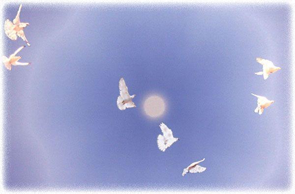 Weiße Tauben Hochzeit  Hochzeitstauben in Wien – Weiße Tauben für Ihre Hochzeit