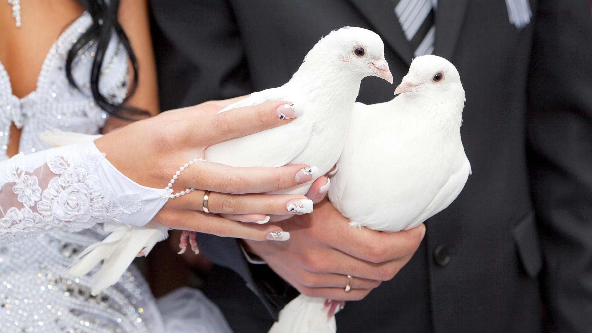 Weiße Tauben Hochzeit  Tauben zur Hochzeit Woher kommt der Brauch