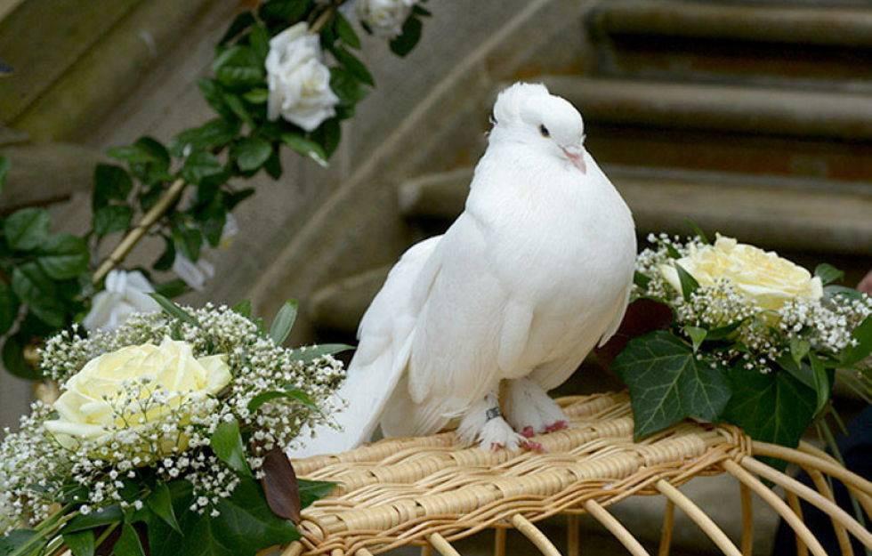 Weiße Tauben Hochzeit  Pin Weisse tauben hochzeit on Pinterest