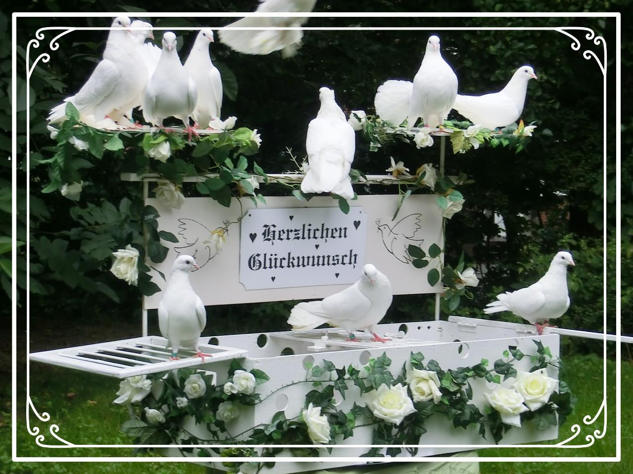 Weiße Tauben Hochzeit  Weiße Tauben HH hochzeitstauben buxtehude Webseite