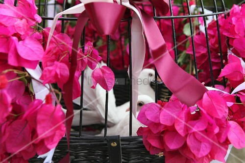 Weiße Tauben Hochzeit  weiße Tauben zur Hochzeit in Käfig mit – Bild kaufen