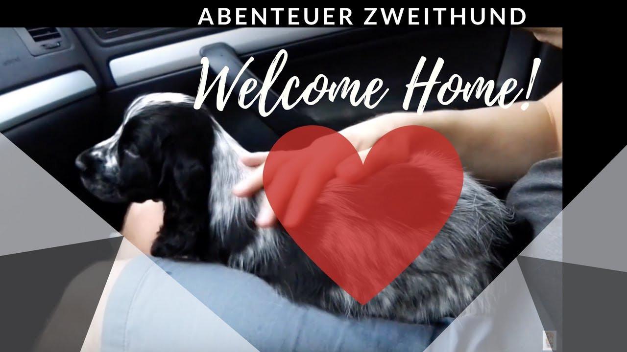 Willkommen Zu Hause  Abenteuer Zweithund Willkommen zu Hause Hamlet